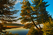 WHite pine trees on Lake of Two Rivers<br />Algonquin Provincial Park<br />Ontario<br />Canada