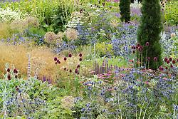 Mixed perennial and grass borders at Broughton Grange. Planting includes Eryngium x zabelii, Allium sphaerocephalon, Stachys byzantina and Taxus baccata 'Fastigiata'