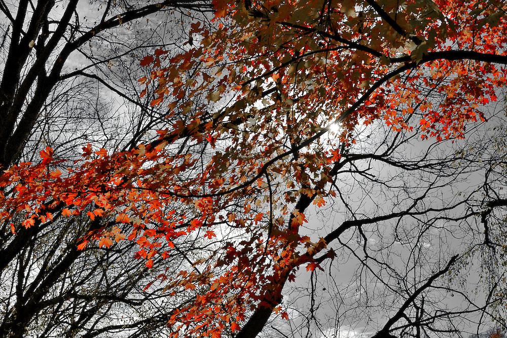 Ohio Nature