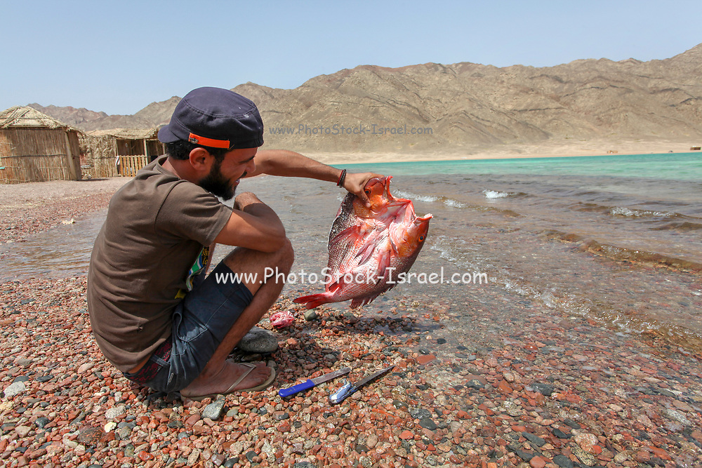 Young male tourist cleaning a fresh fish at the Blue Lagoon resort, (Dahab), Sinai, Egypt