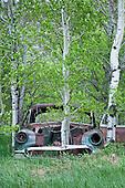 Aspens Reclaim Grove from 1963 Chevy