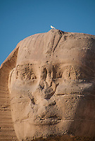 Close-up of the face of the Sphinx with a white bird sitting on the top.