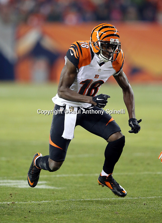 Cincinnati Bengals wide receiver A.J. Green (18) goes out for a pass during the 2015 NFL week 16 regular season football game against the Denver Broncos on Monday, Dec. 28, 2015 in Denver. The Broncos won the game in overtime 20-17. (©Paul Anthony Spinelli)