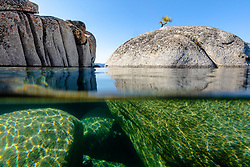 """Bonsai Tree on Lake Tahoe Boulder 6"" - Photograph of a bonsai like tree on a boulder near State Line Point in Crystal Bay, Lake Tahoe. Over-under photo where half the lens is under water, shot from a kayak in the morning."