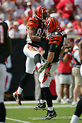 TAMPA, FL - OCTOBER 15:  Wide receiver T.J. Houshmandzadeh #84 of the Cincinnati Bengals jumps and celebrates with quarterback Carson Palmer #9 after catching a 33 yard touchdown pass against the Tampa Bay Buccaneers at Raymond James Stadium on October 15, 2006 in Tampa, Florida. The Bucs defeated the Bengals 14-13. (©Paul Anthony Spinelli) *** Local Caption *** T.J. Houshmandzadeh;Carson Palmer