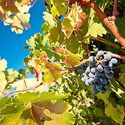 Clarksburg California Stock Images