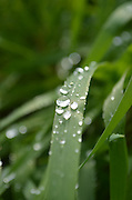 water drops on a blade of grass