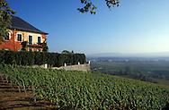 DEU, Germany, Rheingau, view from the castle Johannisberg to the Rhine valley.....DEU, Deutschland, Rheingau, Blick vom Schloss Johannisberg ins Rheintal.........