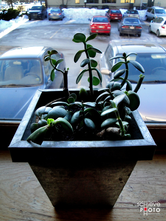 House plant in the window.