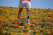 California Poppy Bloom 2014