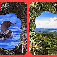 THIS ITEM IS THE FIRST LOON IMAGE (BLUE Background)<br /> Common Loon and Squam Lake Ornament <br /> Double Sided Photographs printed on Metal. <br /> Front side is the loon with a view from Mt Morgan overlooking Squam Lake on back.<br /> Approx 3x3<br /> Proudly Made in USA