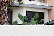 large cactus plant growing above the wall at residential house garden