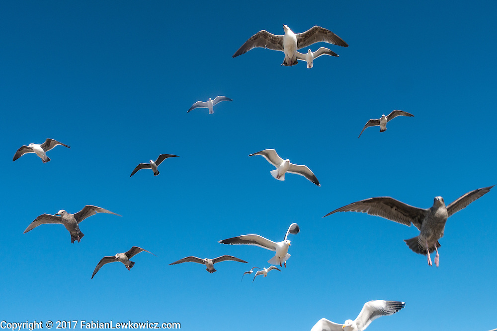 A flock of seaguls fly above the Santa Monica Pier on February 23, 2017.