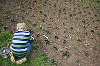 Boy (5-6) planting crops in field