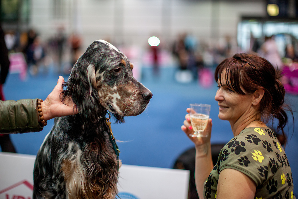 An English Setter  named TAMARILLO Simarilion with the owner celebrating with a glass of sparkling wine at the Leipzig Trade Fair. Over 31,000 dogs from 73 nations will come together from 8-12 November 2017 in Leipzig for the biggest dog show in the world.