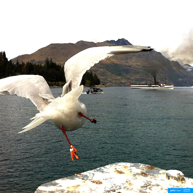 A one footed Seagull takes flight near the TSS Earnslaw, the 100 year old vintage coal fired passenger steam ship which sails on Lake Wakatipu, Queenstown, New Zealand. The popular tourist attraction is celebrating it's centenary year with celebrations planned for October 2012.  Queenstown, Central Otago, New Zealand. 29th February 2012. Photo Tim Clayton