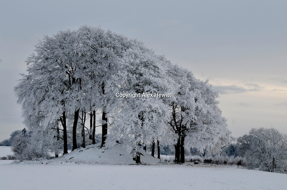 Snow covered trees in Perthshire, Scotland..photo by Alex Hewitt.alex.hewitt@gmail.com.07789871540