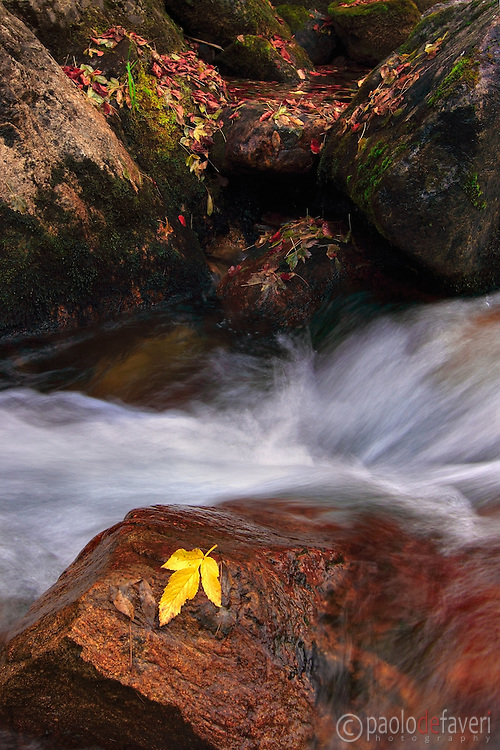 An intimate view of an alpine creek in Autumn.
