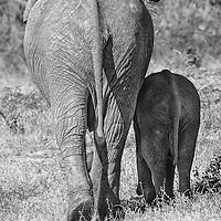 Mother & baby elephant walking away