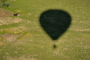 The shadow of Chuck and Nancy Mitchell's balloon named Nanchuckit's Burning Desire is seen next to livestock in a field in Weld County, Sunday, June 2, 2013. Animals often run from the shadow as the balloon passes almost silently overhead.<br /> (Matthew Jonas/Times-Call)
