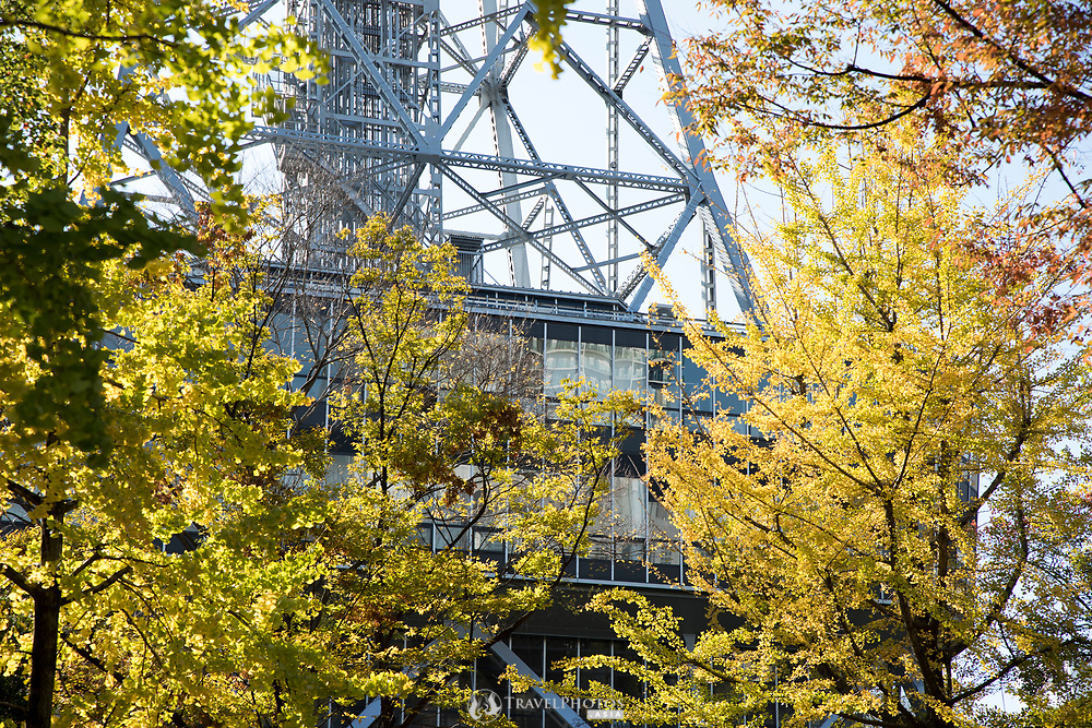Autumn leaves at Nagoya TV Tower
