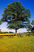 Image of cannons Valley Forge National Historical Park, Pennsylvania, American Northeast