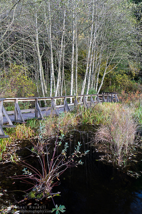 The Deer Lake Trail boardwalk in Sasquatch Provincial Park, British Columbia, Canada.  The Deer Lake Trail boardwalk passes over a wetland marsh on the west side of the lake near the Bench Campgrounds.