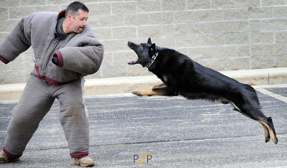 City of Fond du Lac police dog Packo, launches himself at Jefferson County Sheriff's deputy Don Petig who is wearing a protective suit, during the Wisconsin Law Enforcement Canine Handlers Association conference being held in Fond du Lac. Tuesday, October 9, 2012. Patrick Flood/The Reporter.