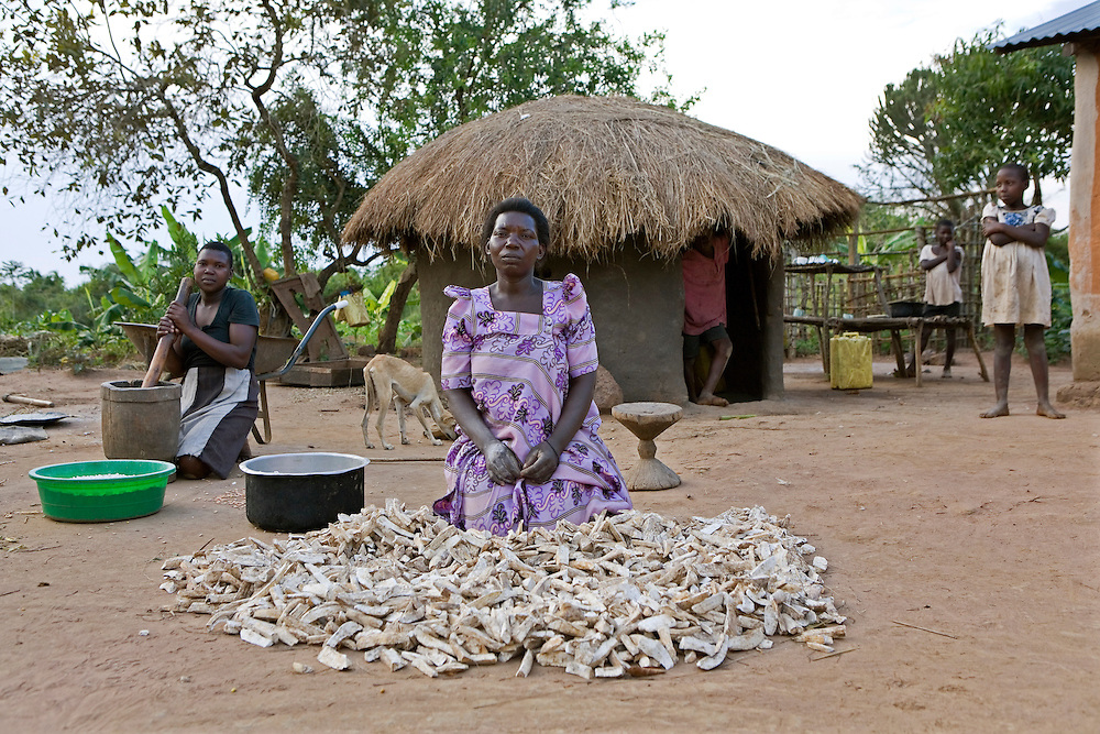 Margaret Nakazi processing her Cassava with the help of her family on her farm in the Nakasongolo district of Uganda. It takes 6 months from start to harvest and she uses it for home consumption. She is a lone parent to her 6 children.