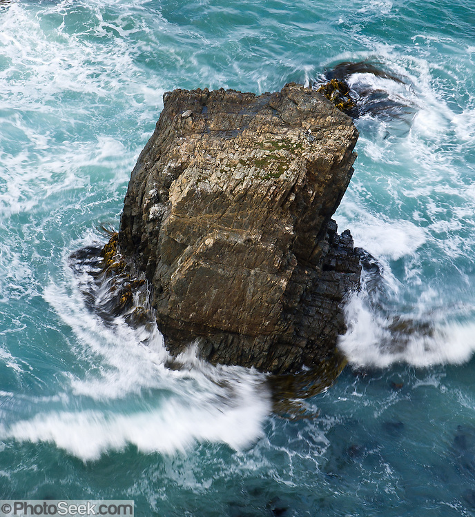 Kelp swirls around a sea stack rock in the South Pacific Ocean offshore from Nugget Point, in the Catlins District, South Island, New Zealand.
