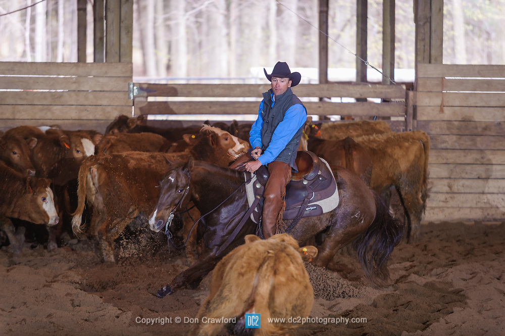 April 29 2017 - Minshall Farm Cutting 1, held at Minshall Farms, Hillsburgh Ontario. The event was put on by the Ontario Cutting Horse Association. Riding in the 5,000 Novice Horse Class is Troy Donaldson on Dual Peps Tom Cat owned by James Cook.
