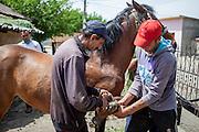 The local horseshoer in the Roma area of Frumusani.