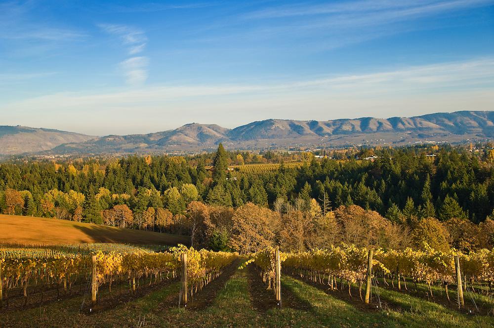 Phelps Creek Vineyards, Hood River Valley, Oregon.