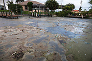 Blue-green algae  in a canal near the Midpoint Memorial Bridge in Cape Coral  Florida. Many people are leaving their homes due to the envirenmntal disater.
