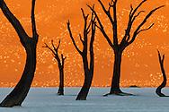 Dead camelthorn trees, Dead Vlei, Sossusvlei, Namib-Naukluft National Park, Namibia