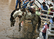 Bareback Rider Christopher J Harris scores an 87 riding 299 Lunatic Fringe BH, Championship Sunday, 29 July 2007, Cheyenne Frontier DaysChampionship Sunday, 29 July 2007, Cheyenne Frontier Days