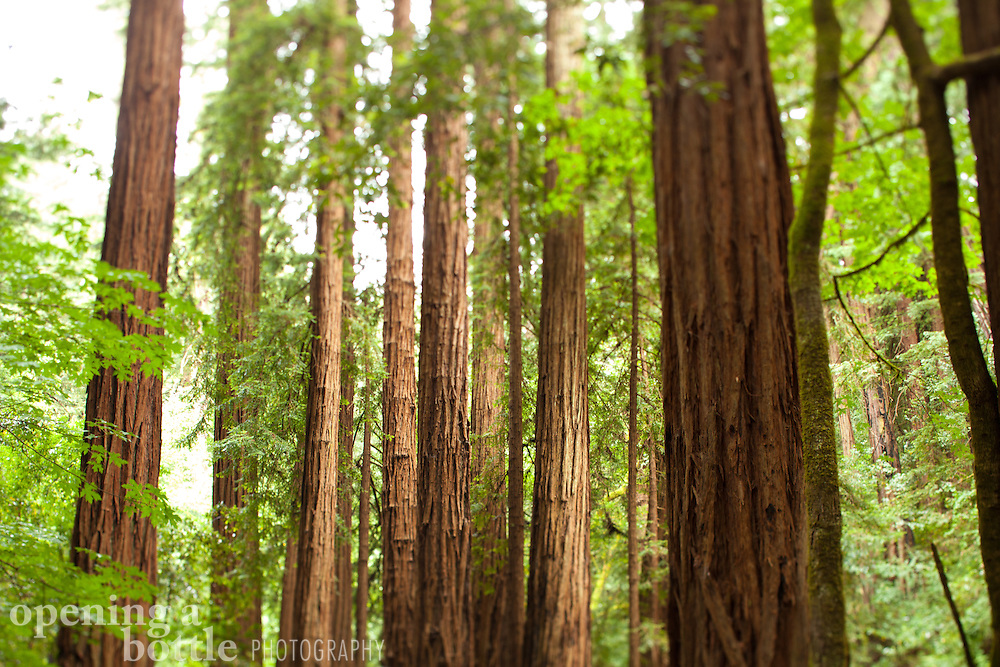 Muir Woods National Monument, Marin County, California