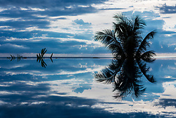 Palm Tree Reflecting on the Water of Infinity Pool, Ko Samui, Thailand