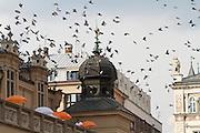 Poland, Krakow. Rynek Glówny (Market Square). Doves.