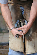 Farrier preparing a horse's hoof for new shoe sitting and shaping the shoe