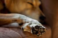 Dog sleeping on chair, 2009.