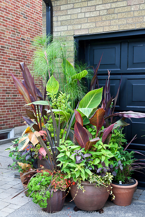 Urban front yard container garden with mixed edibles, perennials and shrubs.