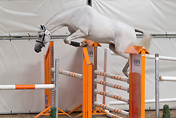 051 - Eolivia VDL<br /> KWPN Paardendagen - Ermelo 2012<br /> © Dirk Caremans
