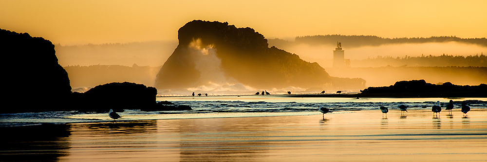 The Bandon lighthouse stands as a sentinal above the seagulls on the beach at sunrise on the Oregon Coast