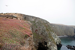 Cliffs along Anacapa Island, Channel Islands National Park, California, United States of America