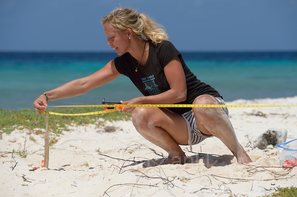 """Sea Turtle Conservation Bonaire (STCB)"" is patrolling the seaturtle beaches of ""Klein Bonaire"". If they find a new nest, the position is recorded and a temperature logger is placed in the nest. Sandra Striegel (Meeresschildkrötenforscherin, GEO Stipendium)"