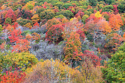 Autumn colors at Graveyard Fields, located along the Blue Ridge Parkway near Asheville