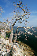 Sea birds nesting area at Mogo Mogo island. Las Perlas archipelago, Panama province, Pacific Ocean,Rep.of Panamá, Central America.
