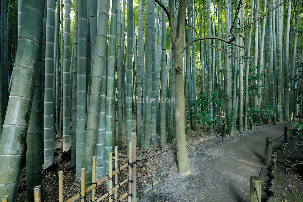 path inside the bamboo forest garden at Hokokuji Temple Kamakura Japan