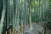 path inside the bamboo forest garden at Hokokuji Temple Kamakura Japan